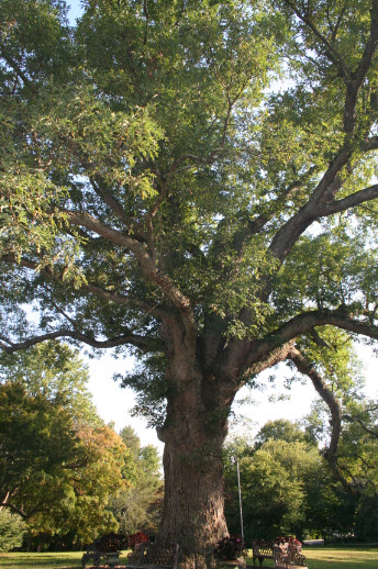 The White Oak at 37 Drake Road